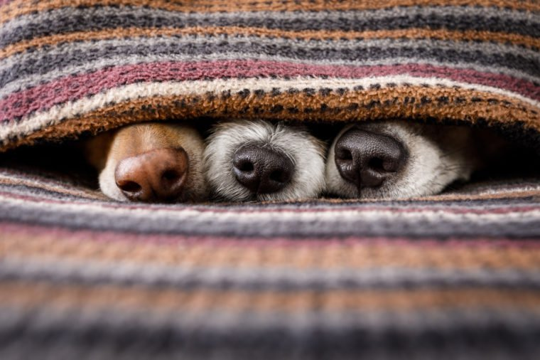 fall colored blankets with dogs' snouts