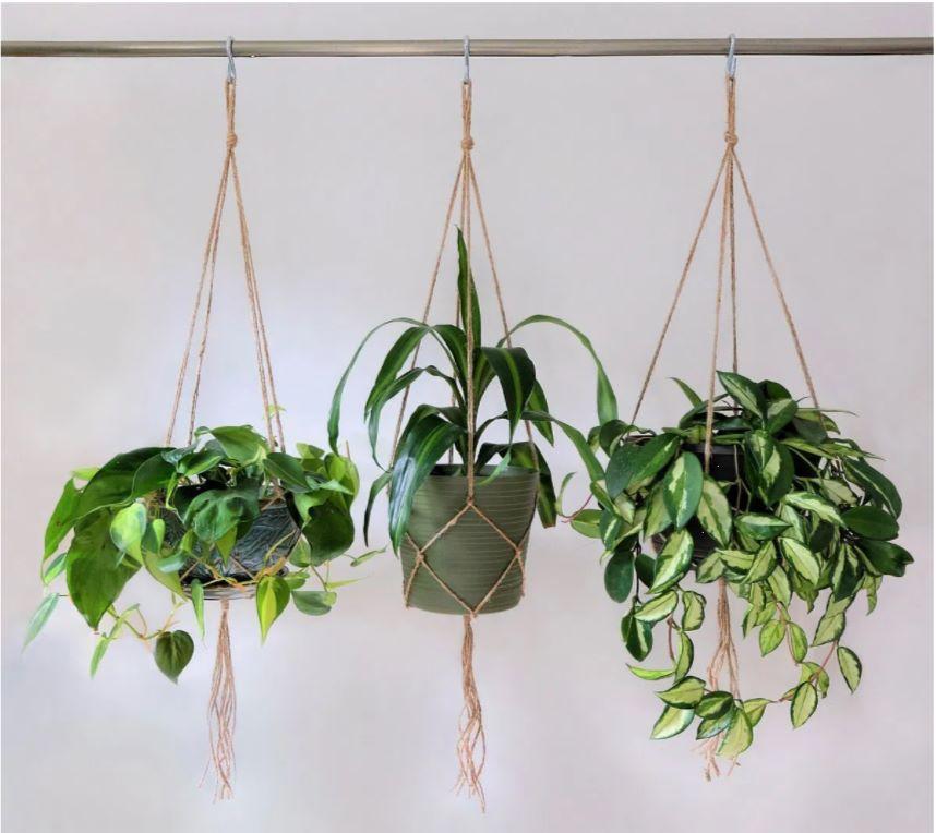 hanging-plants-for-concrete-patio